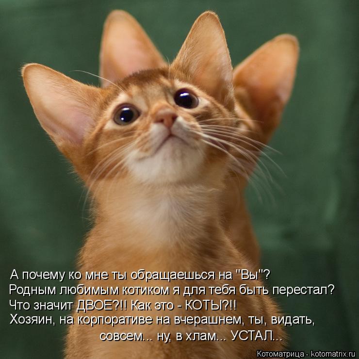 """Котоматрица: А почему ко мне ты обращаешься на """"Вы""""? Родным любимым котиком я для тебя быть перестал? Хозяин, на корпоративе на вчерашнем, ты, видать, совсе"""