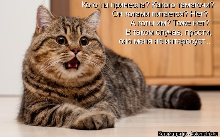 Котоматрица: Кого ты принесла? Какого тамагочи? Он котами питается? Нет? А коты им? Тоже нет? В таком случае, прости, оно меня не интересует...