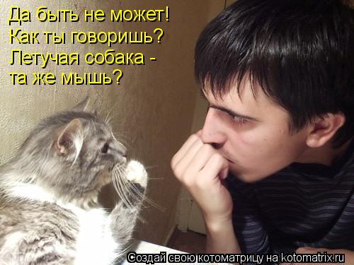 Котоматрица: Да быть не может! Как ты говоришь? Летучая собака -  та же мышь?