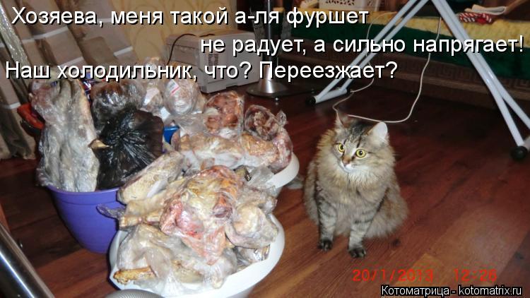 Котоматрица: Хозяева, меня такой а-ля фуршет  не радует, а сильно напрягает! Наш холодильник, что? Переезжает?