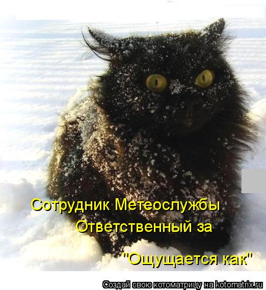 """Котоматрица: Сотрудник Метеослужбы Ответственный за """"Ощущается как"""""""