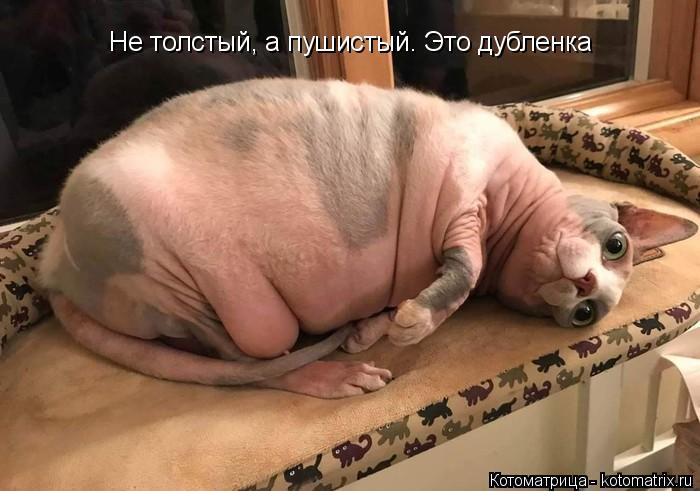 Котоматрица: Не толстый, а пушистый. Это дубленка