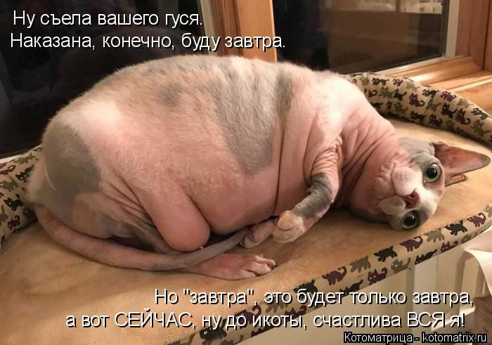 """Котоматрица: Ну съела вашего гуся. Наказана, конечно, буду завтра. Но """"завтра"""", это будет только завтра, а вот СЕЙЧАС, ну до икоты, счастлива ВСЯ я!"""