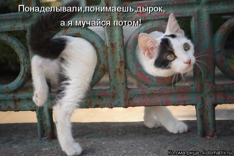 Котоматрица: Понаделывали,понимаешь,дырок, а я мучайся потом!