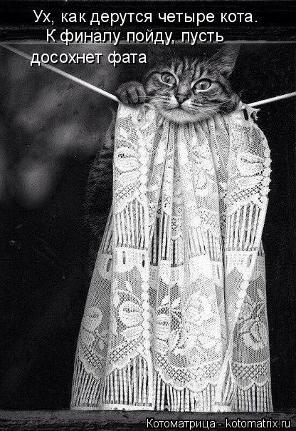 Котоматрица: Ух, как дерутся четыре кота.  досохнет фата К финалу пойду, пусть