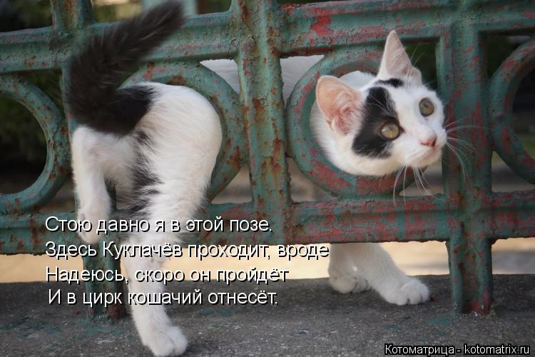Котоматрица: Стою давно я в этой позе. Здесь Куклачёв проходит, вроде Надеюсь, скоро он пройдёт И в цирк кошачий отнесёт.