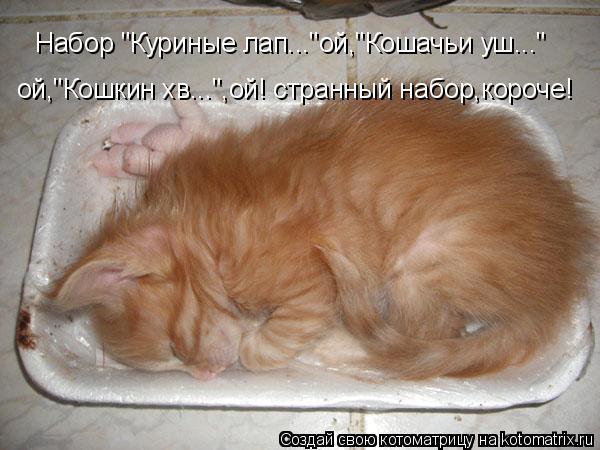 """Котоматрица: ой,""""Кошкин хв..."""",ой! странный набор,короче! Набор """"Куриные лап...""""ой,""""Кошачьи уш..."""""""