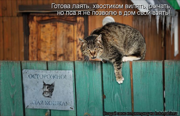 Котоматрица: но пса я не позволю в дом свой взять! Готова лаять, хвостиком вилять, рычать,