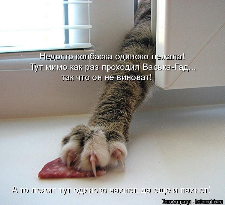 Котоматрица: Недолго колбаска одиноко лежала! Тут мимо как раз проходил Васька-Гад... так что он не виноват! А то лежит тут одиноко чахнет, да еще и пахнет!