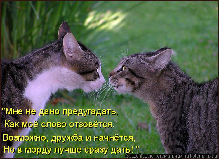 """Котоматрица: """"Мне не дано предугадать, Как моё слово отзовётся. Возможно, дружба и начнётся, Но в морду лучше сразу дать! """""""