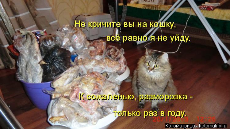 Котоматрица: Не кричите вы на кошку, всё равно я не уйду. К сожаленью, разморозка -  только раз в году.
