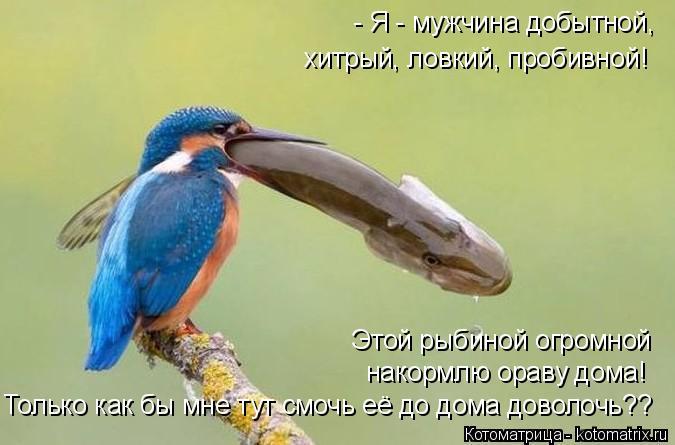 Котоматрица: - Я - мужчина добытной,   хитрый, ловкий, пробивной! Этой рыбиной огромной накормлю ораву дома! Только как бы мне тут смочь её до дома доволочь?