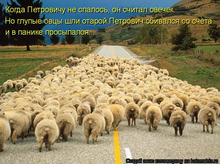 Котоматрица: Когда Петровичу не спалось, он считал овечек. Но глупые овцы шли отарой,Петрович сбивался со счёта и в панике просыпался...