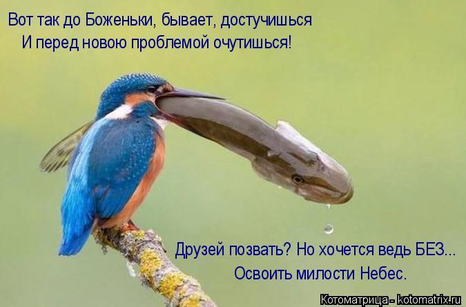 Котоматрица: И перед новою проблемой очутишься! Вот так до Боженьки, бывает, достучишься Освоить милости Небес. Друзей позвать? Но хочется ведь БЕЗ...