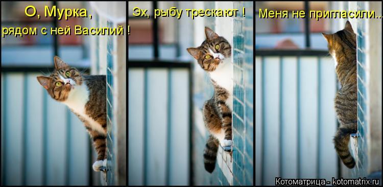 Котоматрица: О, Мурка, рядом с ней Василий ! Эх, рыбу трескают ! Меня не пригласили...