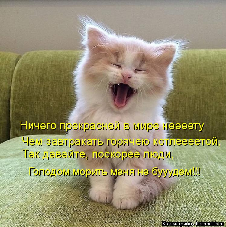 Котоматрица: Ничего прекрасней в мире неееету Чем завтракать горячею котлеееетой, Так давайте, поскорее люди,  Голодом морить меня не бууудем!!!