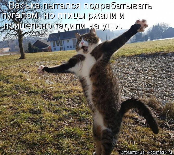 Котоматрица: Васька пытался подрабатывать  пугалом, но птицы ржали и прицельно гадили на уши.