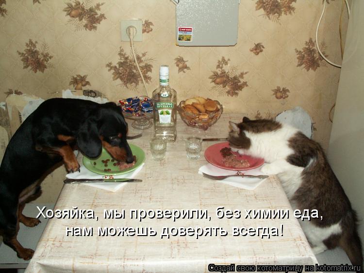 Котоматрица: Хозяйка, мы проверили, без химии еда, нам можешь доверять всегда!