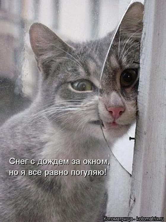 Котоматрица: Снег с дождем за окном,  но я все равно погуляю!