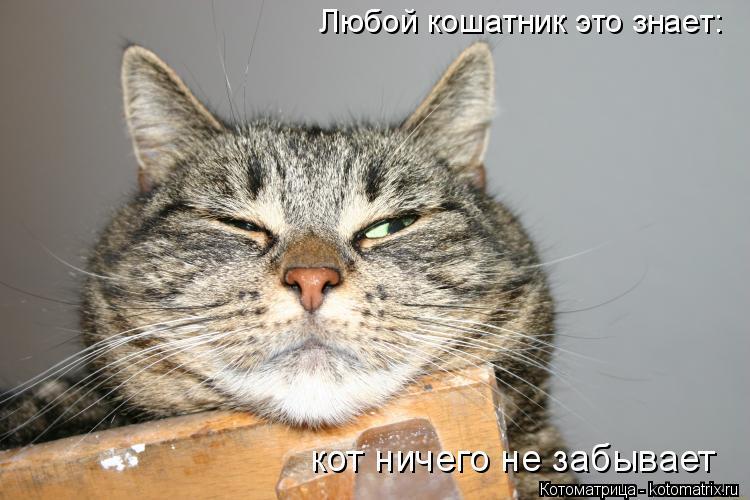 Котоматрица: Любой кошатник это знает: кот ничего не забывает