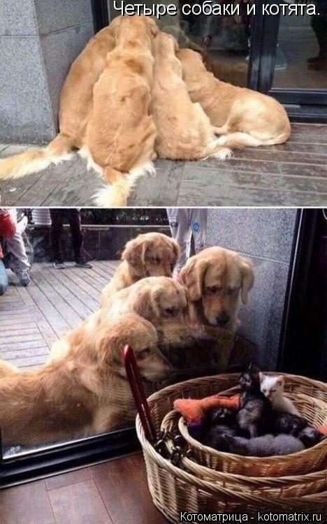 Котоматрица: Четыре собаки и котята.