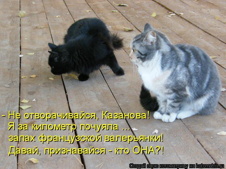 Котоматрица: - Не отворачивайся, Казанова! Я за километр почуяла ... запах французской валерьянки! Давай, признавайся - кто ОНА?!