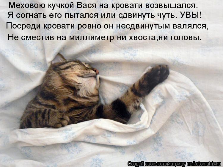 Котоматрица: Меховою кучкой Вася на кровати возвышался. Я согнать его пытался или сдвинуть чуть. УВЫ! Посреди кровати ровно он несдвинутым валялся, Не см