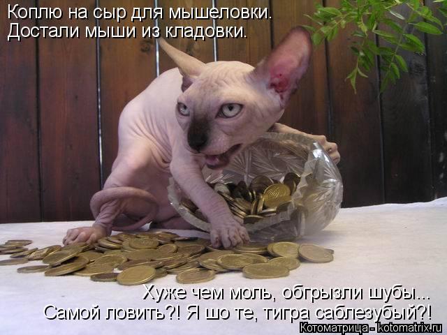Котоматрица: Коплю на сыр для мышеловки. Достали мыши из кладовки. Самой ловить?! Я шо те, тигра саблезубый?! Хуже чем моль, обгрызли шубы...