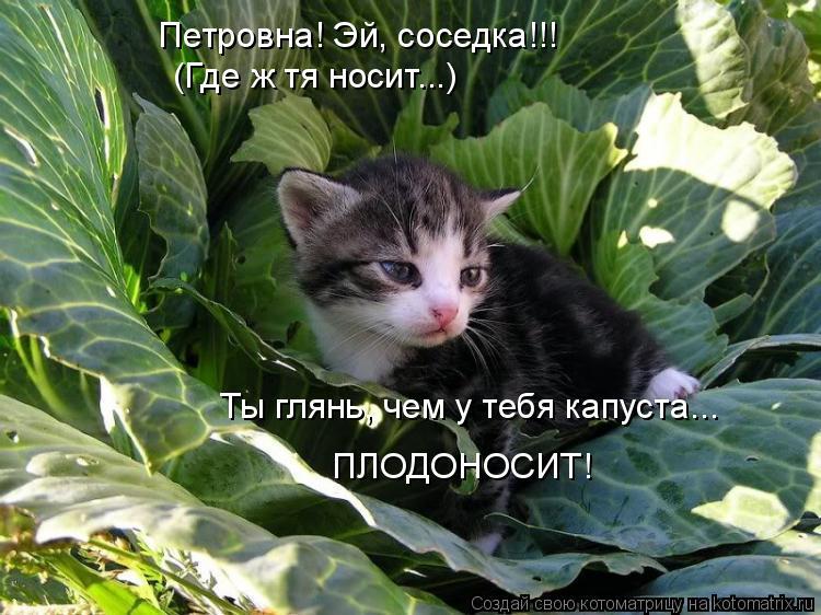 Котоматрица: Петровна! Эй, соседка!!! (Где ж тя носит...) Ты глянь, чем у тебя капуста... ПЛОДОНОСИТ!