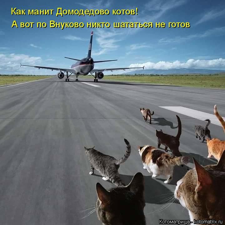 Котоматрица: Как манит Домодедово котов!  А вот по Внуково никто шататься не готов