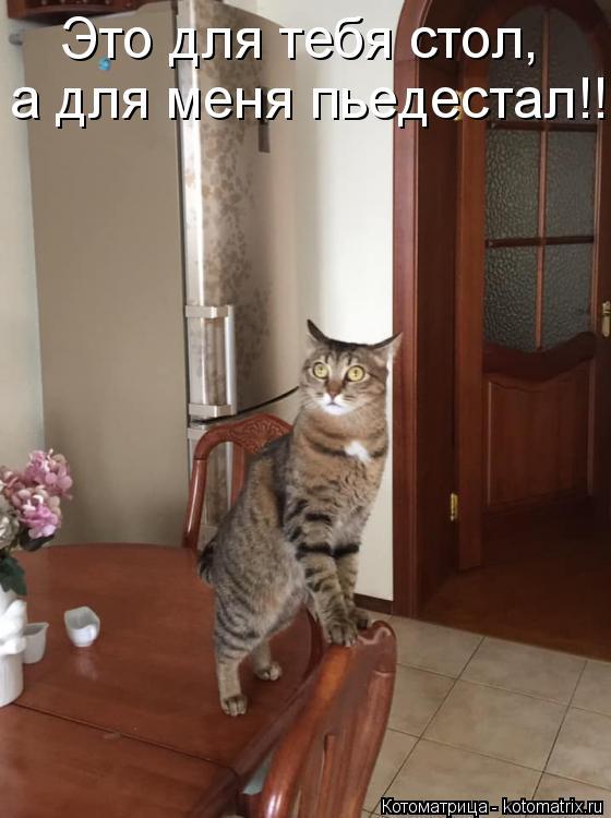 Котоматрица: Это для тебя стол, а для меня пьедестал!!!!!
