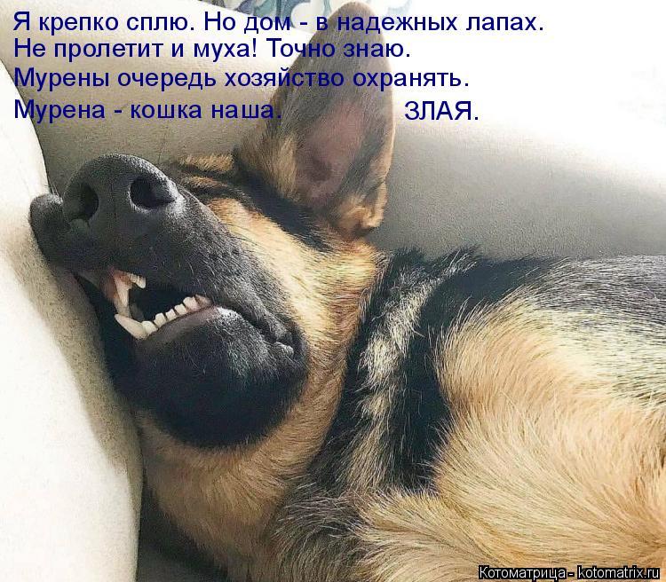 Котоматрица: Я крепко сплю. Но дом - в надежных лапах. Не пролетит и муха! Точно знаю. Мурены очередь хозяйство охранять. Мурена - кошка наша.  ЗЛАЯ.