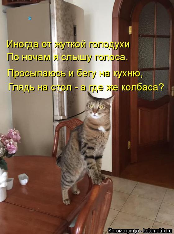 Котоматрица: Иногда от жуткой голодухи По ночам я слышу голоса. Просыпаюсь и бегу на кухню, Глядь на стол - а где же колбаса?