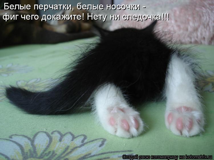Котоматрица: Белые перчатки, белые носочки -  фиг чего докажите! Нету ни следочка!!!