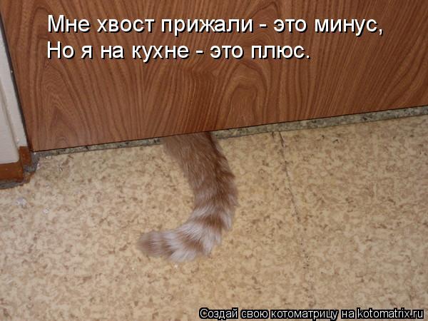 Котоматрица: Мне хвост прижали - это минус, Но я на кухне - это плюс.