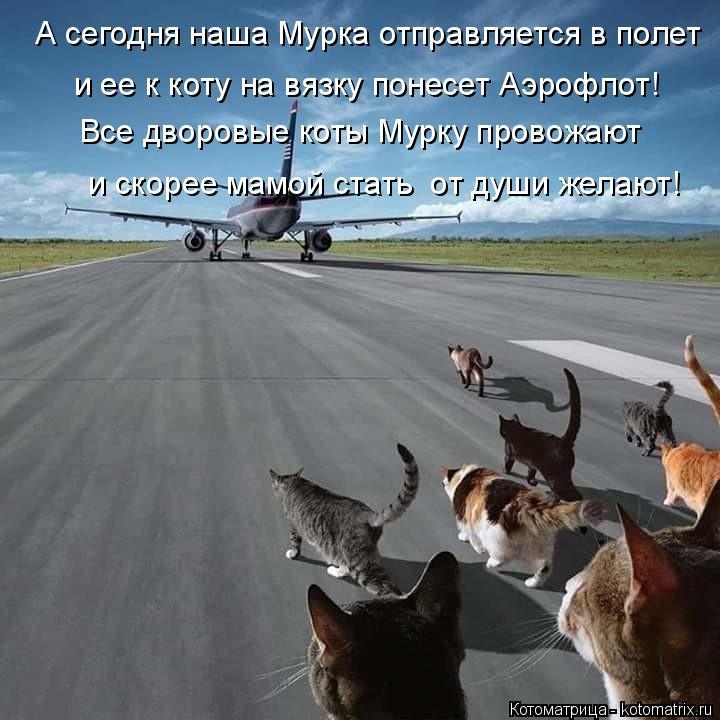 Котоматрица: Все дворовые коты Мурку провожают А сегодня наша Мурка отправляется в полет и ее к коту на вязку понесет Аэрофлот!  и скорее мамой стать  от ?