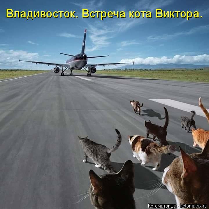 Котоматрица: Владивосток. Встреча кота Виктора.
