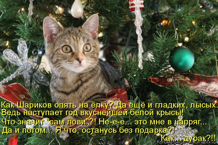 """Котоматрица: Как Шариков опять на ёлку? Да ещё и гладких, лысых... Ведь наступает год вкуснейшей белой крысы! Что значит """"сам лови""""?! Не-е-е... это мне в напряг"""
