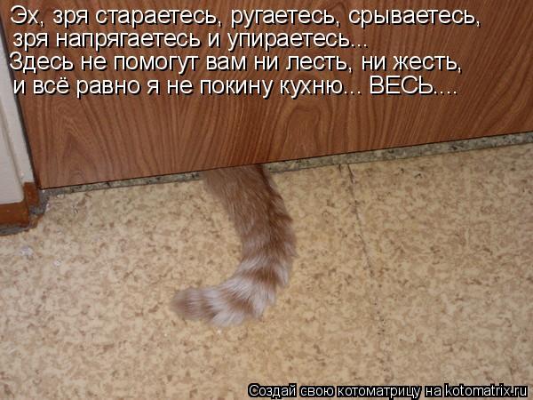 Котоматрица: Эх, зря стараетесь, ругаетесь, срываетесь, зря напрягаетесь и упираетесь... и всё равно я не покину кухню... ВЕСЬ.... Здесь не помогут вам ни лес?