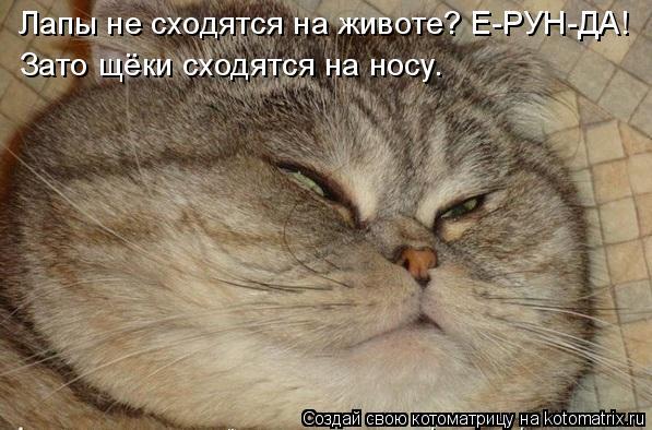 Котоматрица: Лапы не сходятся на животе? Е-РУН-ДА! Зато щёки сходятся на носу.
