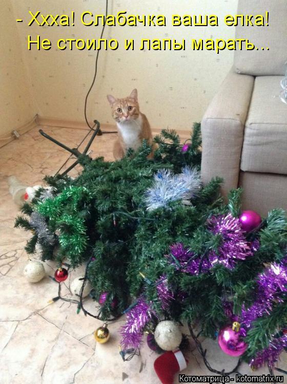 Котоматрица: - Ххха! Слабачка ваша елка! Не стоило и лапы марать...