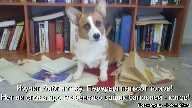 Котоматрица: Изучил библиотеку. Перерыл пятьсот томов! Нет ни слова про главенство ваших баловней - котов!