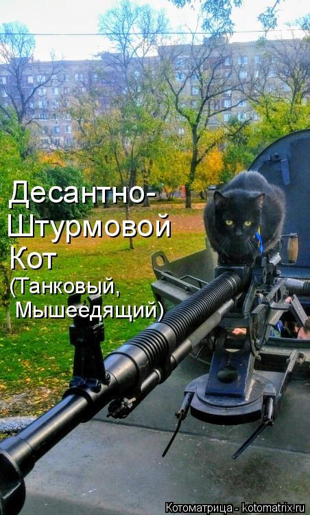 Котоматрица: Десантно- Штурмовой Кот (Танковый, Мышеедящий)