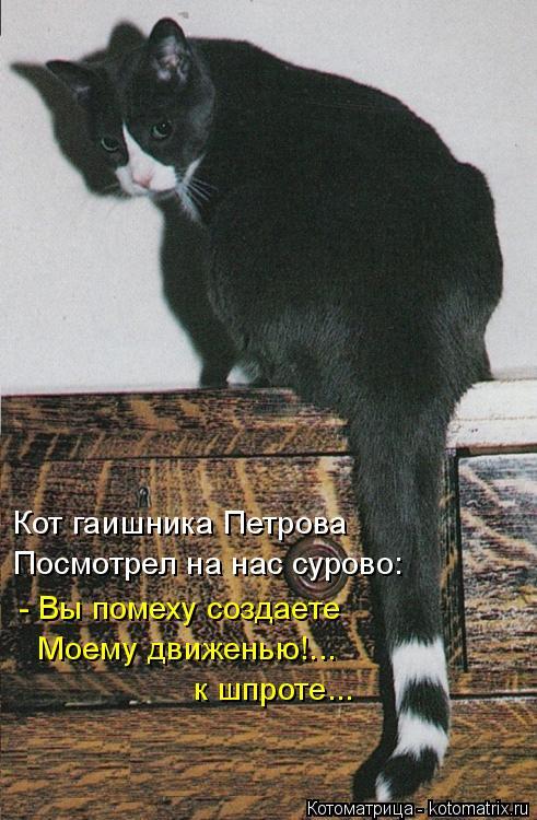 Котоматрица: Кот гаишника Петрова Посмотрел на нас сурово: - Вы помеху создаете Моему движенью!... к шпроте...
