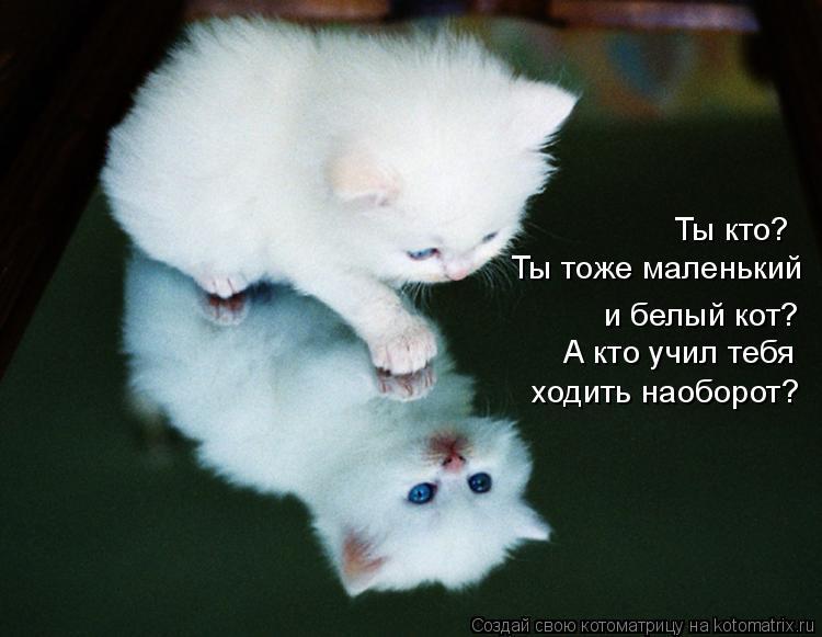 Котоматрица: ходить наоборот? Ты кто?  Ты тоже маленький и белый кот? А кто учил тебя