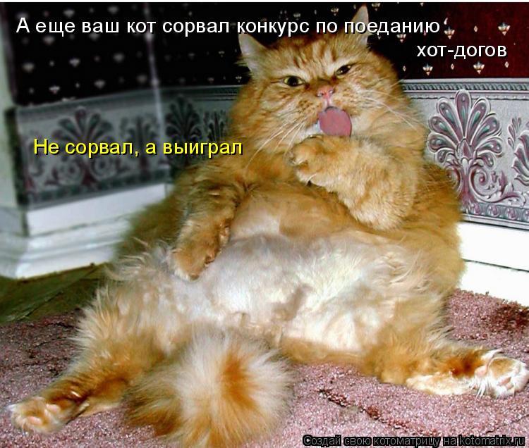 Котоматрица: А еще ваш кот сорвал конкурс по поеданию хот-догов Не сорвал, а выиграл
