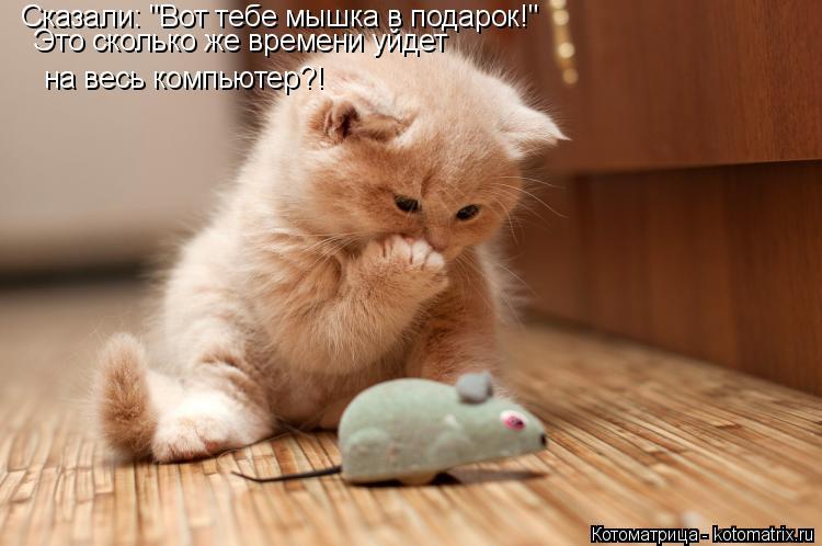 """Котоматрица: Сказали: """"Вот тебе мышка в подарок!"""" Это сколько же времени уйдет на весь компьютер?!"""