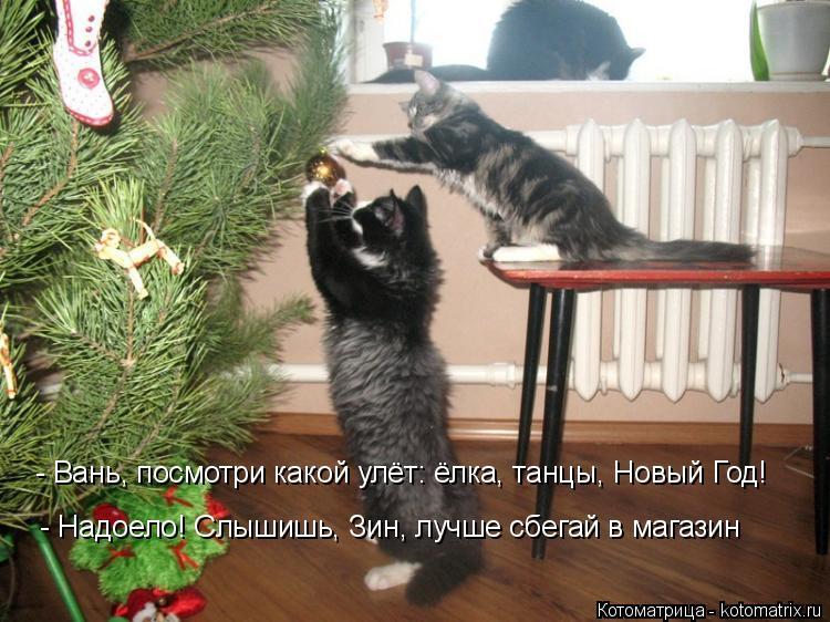 Котоматрица: - Вань, посмотри какой улёт: ёлка, танцы, Новый Год! - Надоело! Слышишь, Зин, лучше сбегай в магазин