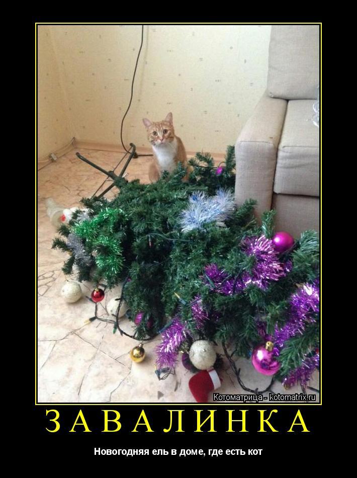 Котоматрица: ЗАВАЛИНКА Новогодняя ель в доме, где есть кот