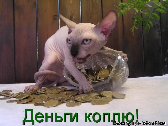 Котоматрица: Деньги коплю!